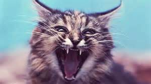 cats meowing sounds why cats meow interpreting cat sounds petcarerx