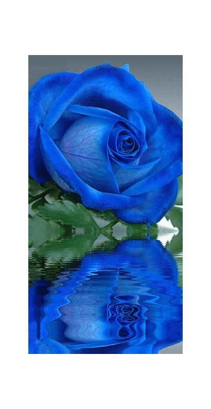 Rose Roses Flower Flowers Chica Glamrock Amazing