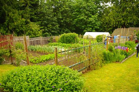 Self Sufficient Backyard - cowichan vally 2010 garden tour observations and