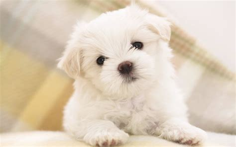 Tenerissime Immagini Di Cuccioli Di Cane In Alta Risoluzione Pixolo It Risorse Creative