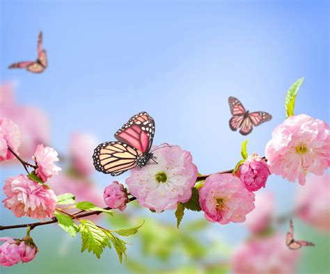 butterfly nature flowers pink flowers blossoms
