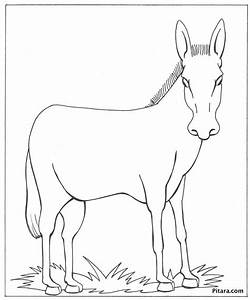 Donkey – Coloring page | Pitara Kids Network
