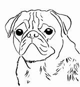Coloring Pug Print sketch template