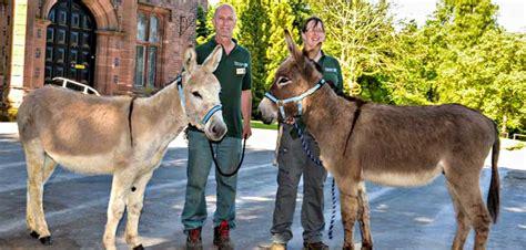 Donkey Delights At Walton Hall And Gardens Zoo