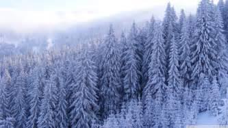 snowy forest wallpaper 910625