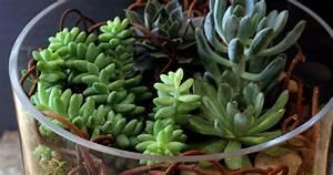 Entretien Plantes Grasses : terrarium basics terrariums set up design and care bloom iq ~ Melissatoandfro.com Idées de Décoration