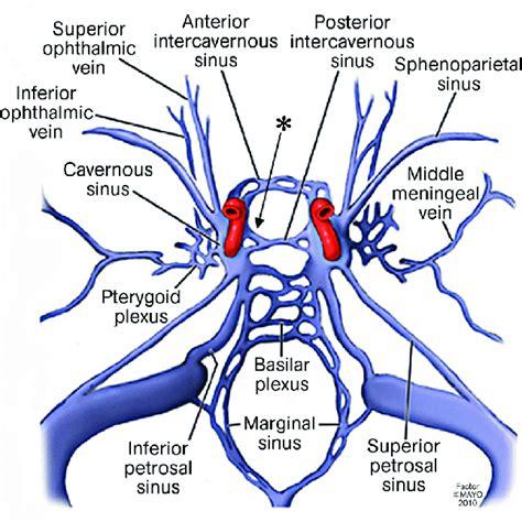 artwork depicting  cavernous sinus   connective