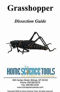 Grasshopper Dissection Instructions Guide