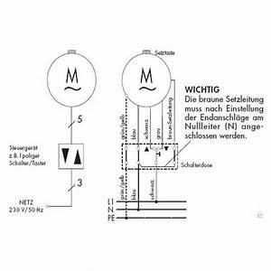 Rolladenmotor Endpunkte Einstellen : rademacher elektronischer rohrmotor rollotube standard rtsm 10 16z 10 nm baureihe medium ab ~ Buech-reservation.com Haus und Dekorationen