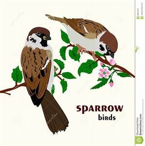 Vector Illustration Of Sparrow Birds Royalty