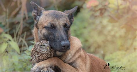 dog   grumpy owl   friends   cute