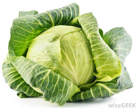 What Is The Difference Between Lettuce And Cabbage?