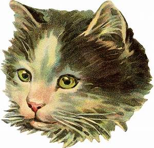 Vintage Cat Illustration