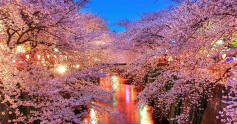 gambar wallpaper bunga sakura jepang gudang wallpaper
