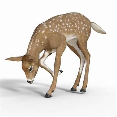 Deer Bambi Roe Reh Young Wild Pixabay