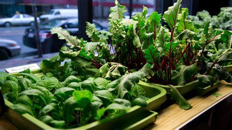 growing flowers indoors indoor hydroponic vegetable garden choosing the best plants for indoor hydroponic gardens