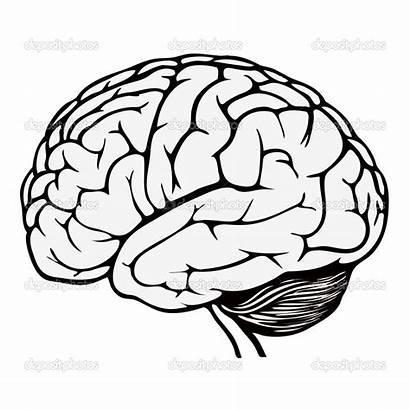 Brain Coloring Human Pages Printable Colouring Getcolorings