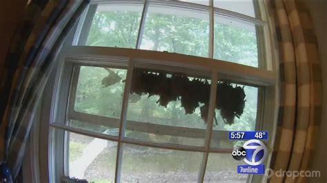 bat colony takes  residence  hunterdon county window