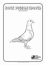 Coloring Pigeon Pages Rock Cool Birds Animals Educational Activities sketch template