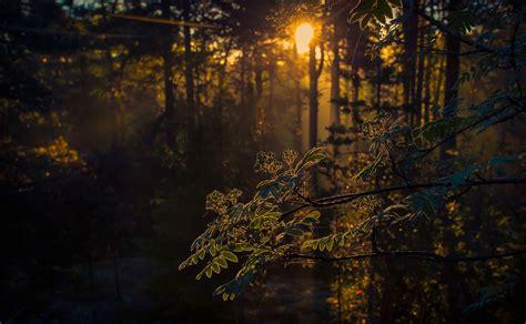 wallpaper gelap alam pohon sinar matahari