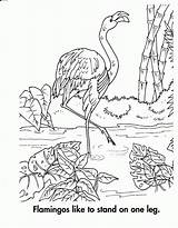 Coloring Habitat Pages Flamingo Habitats Animal Ocean Printables Template Animals Source Printablee Comments sketch template