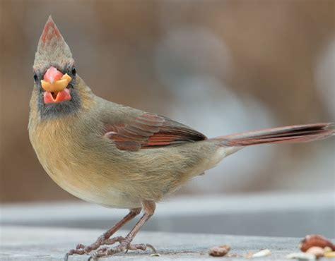wild birds unlimited common winter feeder birds in michigan