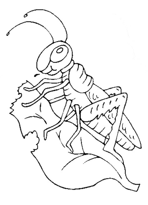 grasshopper coloring page animals town animal color