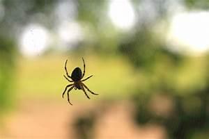 Se Débarrasser Des Araignées : comment se d barrasser des araign es dans la maison ~ Louise-bijoux.com Idées de Décoration