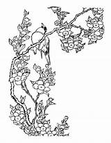 Blossom Cherry Coloring Tree Pages Printable Getcolorings sketch template