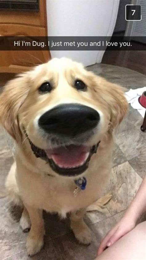 hilarious dog    put  smile   face
