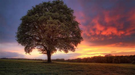 mac de bureau landschap achtergrond met boom bureaublad achtergronden
