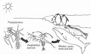 Esaphbursio  Simple Food Chain Diagram
