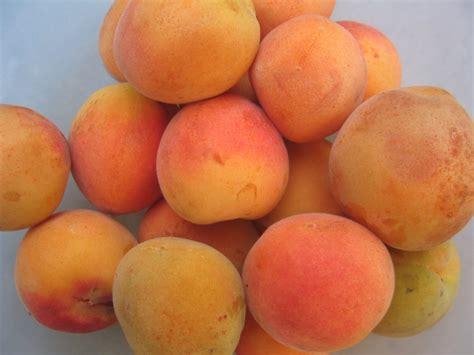 Apricot kernels   PoultryDVM Toxic Plants A-Z