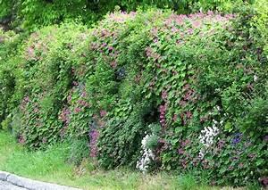 Gartenzaun Höhe Zum Nachbarn : l rmschutz im garten worauf kommt es an ~ Lizthompson.info Haus und Dekorationen