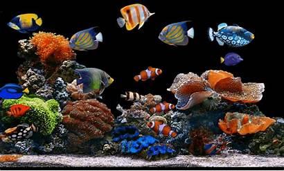 Aquarium Background Text Remove Exposure Effects Sticker