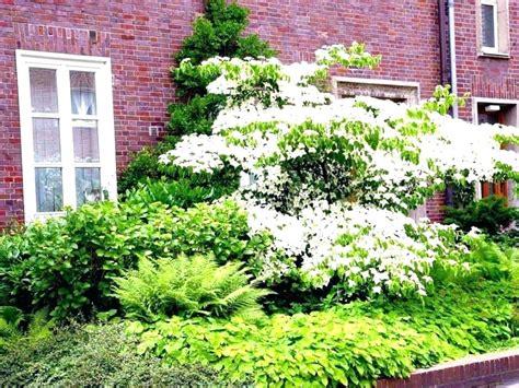 Garten Pflegeleichte Pflanzen pflanzen pflegeleicht garten