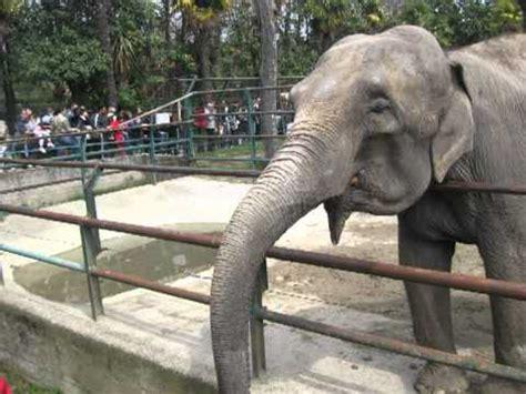 ingresso zoo di pistoia zoo di pistoia pasquetta 2012