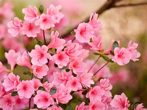 Spring Flowers Wallpapers Hd Pictures