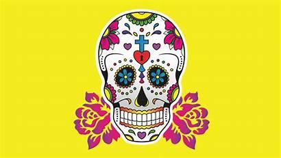 Tutorials Illustrator Graphic Adobe David Brief Beginners