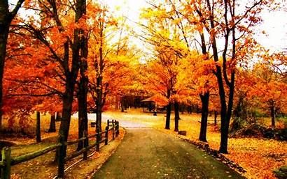 Trees Wallpapers Awesome Autumn Nature Tree Under