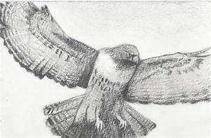 Falcon Flying Drawing | www.imgkid.com - The Image Kid Has It!