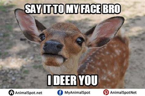 Deer Meme - deer memes