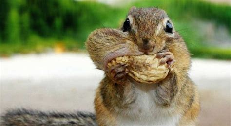 what do squirrels like to eat feedingnature com