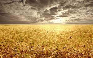 Wheat field at the sunset | Vista's | Pinterest | Wheat ...