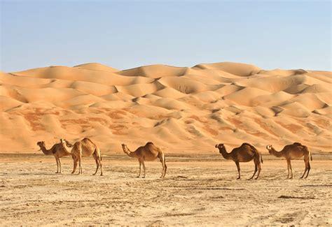 habitat si鑒e social animali che vivono nel deserto natura e animali