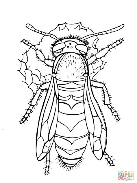 western yellow jacket coloring page  printable
