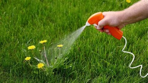 Have You Had A Problem With Your Weed Killer Not Working