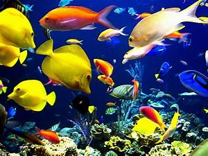 Full HD Wide Nature Wallpapers & Images I Beautiful Nature ...  Aquatic