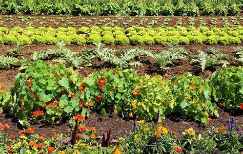 Vegetable Gardening Tips Beginners