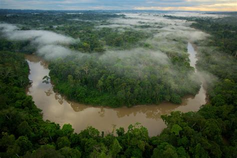 ecuador forest rain oil drilling environment yasuni 1900 dam science